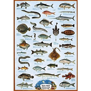 Sea Fish Poster, 26.75