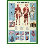 """The Human Body Poster, 26.75"""" x 38.5"""""""