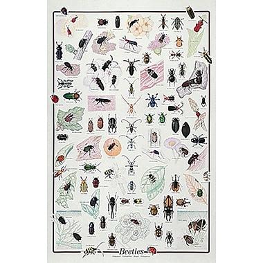Beetles Poster, 26-3/4