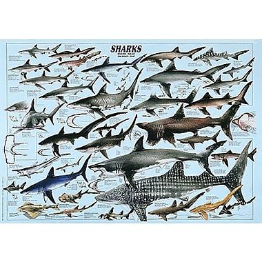 Requins, affiche de 26 3/4 x 38 1/2 po