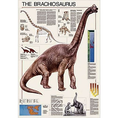 The Brachiosaurus Poster, 26 3/4