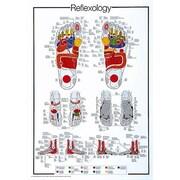 """Reflexology Poster, 26.75"""" x 38.5"""""""