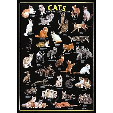 Cats Poster, 26-3/4