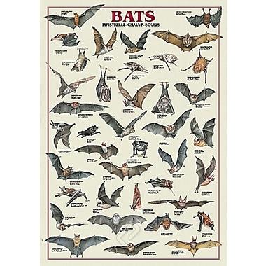 Bats Poster, 26-3/4