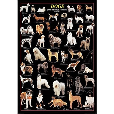 Dogs and Dogs Poster, 26-3/4