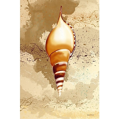 Maxwell Dickson ''Seashell'' Graphic Art on Canvas; 30'' H x 20'' W