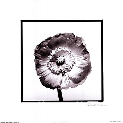 Evive Designs Translucent Poppy I by Mark Baker Photographic Print