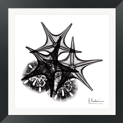 Evive Designs X-ray Starfish and Sand Dollar by Albert Koetsier Framed Photographic Print