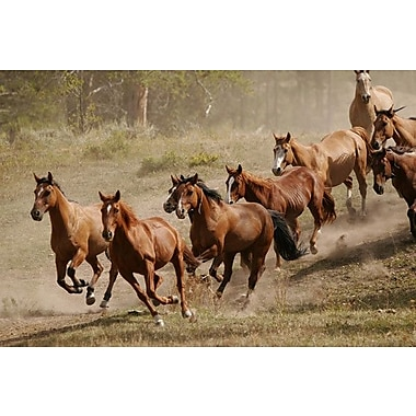 iCanvas Western Ranch Wild Mustangs Photographic Print on Canvas; 12'' H x 18'' W x 0.75'' D