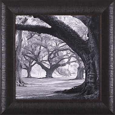 Art Effects Oak Alley, West Row by William Guion Framed Photographic Print