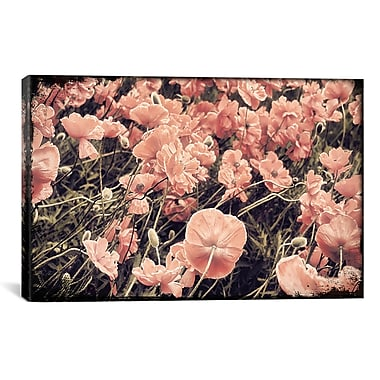 iCanvas 'Ginger Poppies' by Mindy Sommers Photographic Print on Canvas; 12'' H x 18'' W x 1.5'' D