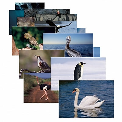 Stages Learning Materials® Birds Poster Set