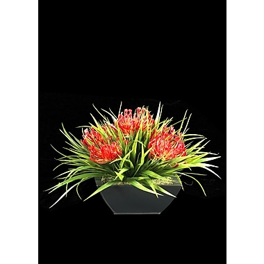 Tree Masters Inc. Accent of Proteas