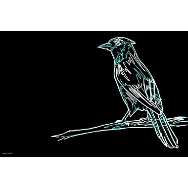 Maxwell Dickson ''Bluejay'' Graphic Art on Canvas; 20'' H x 30'' W