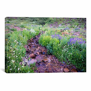 iCanvas Field of Beauty l' by Dan Ballard Photographic Print on Canvas; 26'' H x 40'' W x 1.5'' D