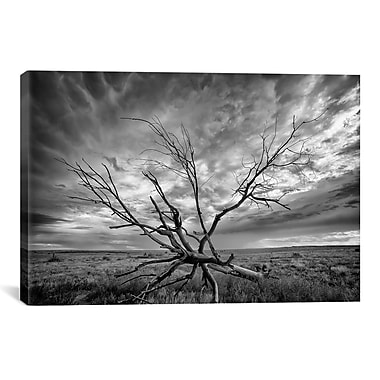 iCanvas 'Colorado Storm' by Dan Ballard Photographic Print on Canvas; 12'' H x 18'' W x 0.75'' D