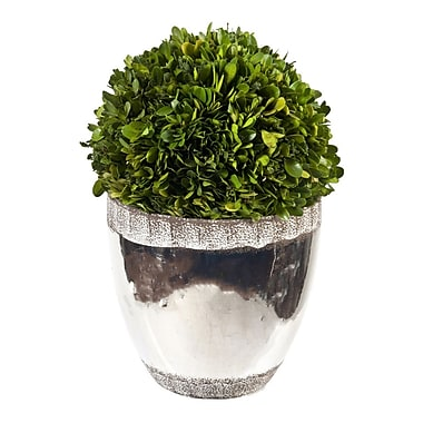 Creative Branch Preserved Boxwood Ball Topiary in Planter