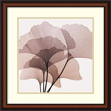 Amanti Art Gingko Leaves II Framed Art by Steven N. Meyers (DSW419138)