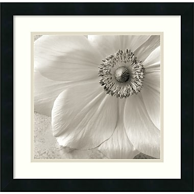 Amanti Art Poppy Study II Framed Art by Sondra Wampler (DSW426316)