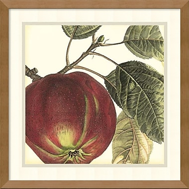 Amanti Art Graphic Apple Framed Art by Vision Studio (DSW978659)
