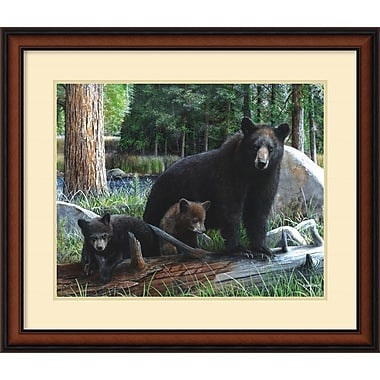 Amanti Art New Discoveries Framed Art by Kevin Daniel (DSW979356)
