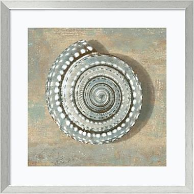Amanti Art Aqua Seashell Framed Art by Caroline Kelly (DSW981626)