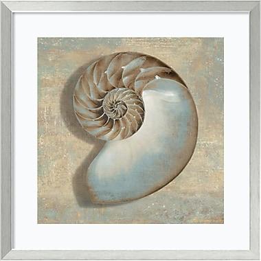 Amanti Art Aqua Nautilus Framed Art by Caroline Kelly (DSW982444)