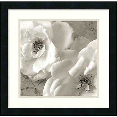 Amanti Art Poppy Study III Framed Art by Sondra Wampler (DSW986883)