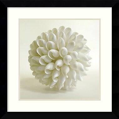Amanti Art Shell III Framed Art by Darlene Shiels (DSW986978)