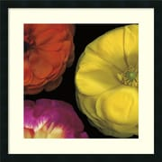 Amanti Art inch Ranunculus II Right inch Framed Artwork by Pip Bloomfield by