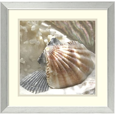 Amanti Art Coral Shell III Framed Art by Donna Geissler (DSW987014)