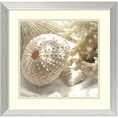 Amanti Art Coral Shell I Framed Art by Donna Geissler (DSW987016)