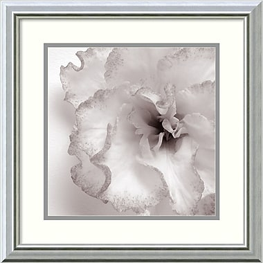 Amanti Art Blossom Two Framed Art by JK Driggs (DSW987666)