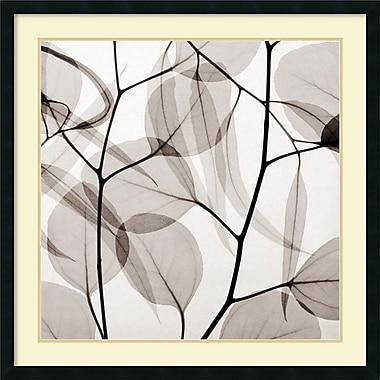 Amanti Art Eucalyptus Leaves Framed Art by Steven N. Meyers (DSW987670)