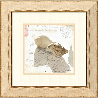 Amanti Art Postal Shells I Framed Art by Deborah Schenck (DSW992088)
