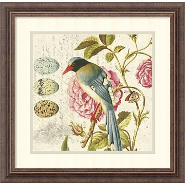 Amanti Art Bird Study 1 Framed Art by Paula Scaletta (DSW992091)