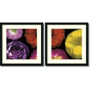 Amanti Art inch Ranunculus II Set of 2 inch Framed Artwork by Pip Bloomfield by