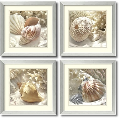 Amanti Art Coral Shell Framed Art by Donna Geissler, 4/Pack (DSW995046)
