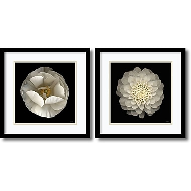 Amanti Art Levine Florals Framed Art by Neil Seth Levine, 2/Pack (DSW995053)