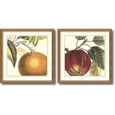 Amanti Art Graphic Orange & Apple Framed Art by Vision Studio, 2/Pack (DSW995071)