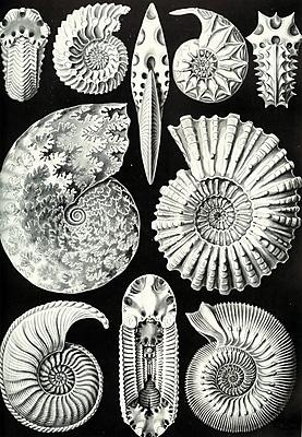 Evive Designs Vintage Seashells 'III' by Julia Kearney Graphic Art Print