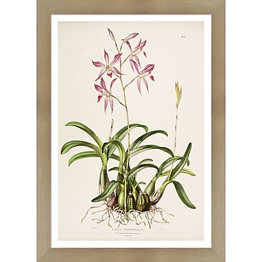 Evive Designs Vintage Botanical V by Julia Kearney Framed Painting Print