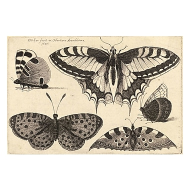 Evive Designs Vintage Butterfly 'III' by Julia Kearney Graphic Art Print