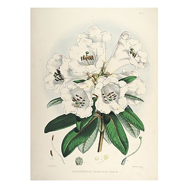 Evive Designs Vintage Botanical 'II' by Julia Kearney Graphic Art Print