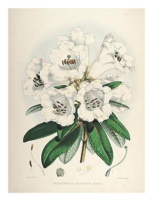 Evive Designs Vintage Botanical 'II' by Julia Kearney Graphic Art Print