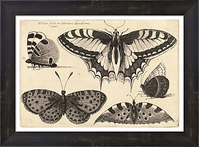 Evive Designs Vintage Butterfly III by Julia Kearney Framed Painting Print