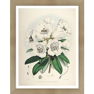 Evive Designs Vintage Botanical II by Julia Kearney Framed Painting Print