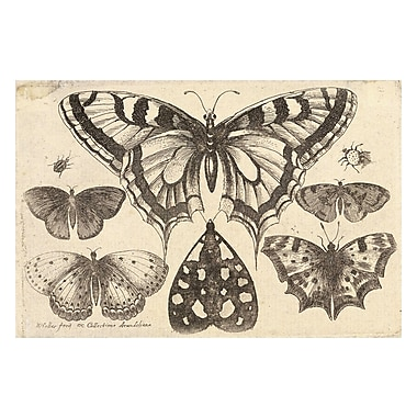 Evive Designs Vintage Butterfly 'II' by Julia Kearney Graphic Art Print