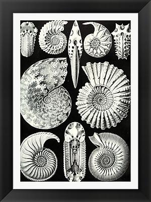 Evive Designs Vintage Seashells III by Julia Kearney Framed Graphic Art