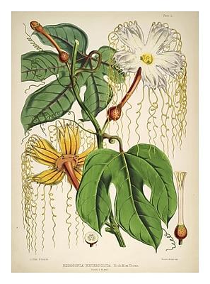 Evive Designs Vintage Botanical 'III' by Julia Kearney Graphic Art Print